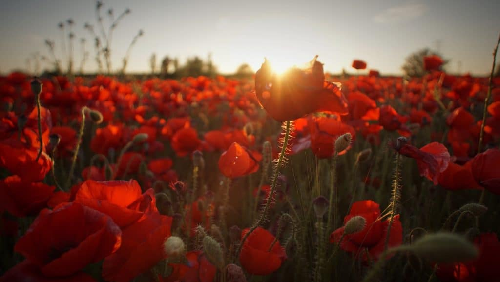 Bible words for Remembrance Sunday